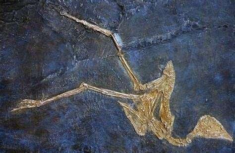 Museo Virtual de Paleontología (Universidad de Huelva)